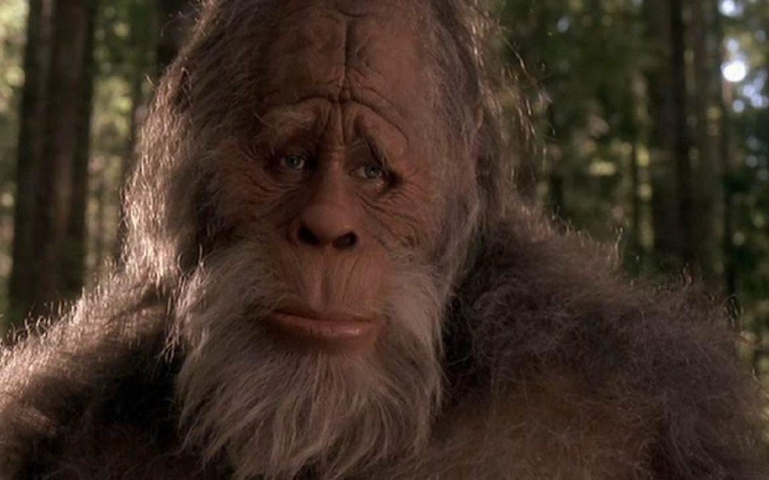 Are You Bigfoot in the Kitchen?